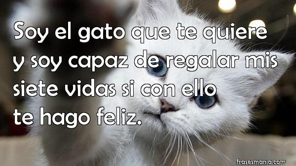 Soy El Gato Que Te Quiere Y Soy Capaz De Frases