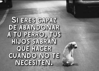 No abandones a tu perro