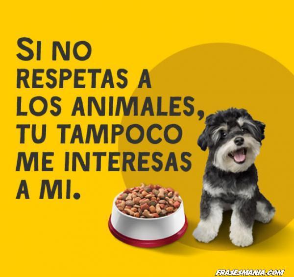 Respeto por los perros